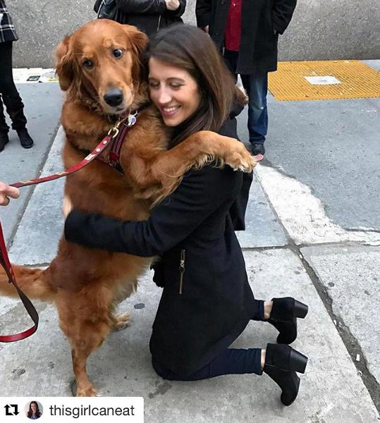 Cão distribui abraços e alivia estresse de pessoas nas ruas de Nova York 7