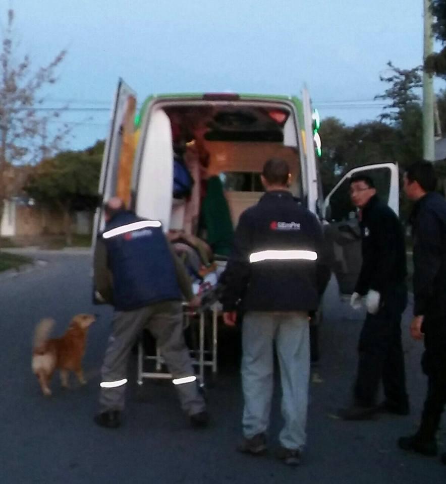 Cãozinho se recusa a sair de perto do dono desmaiado em acidente na Argentina 2