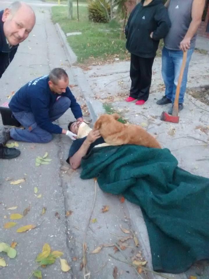 Cãozinho se recusa a sair de perto do dono desmaiado em acidente na Argentina 3