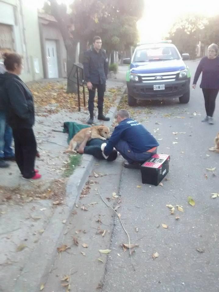 Cãozinho se recusa a sair de perto do dono desmaiado em acidente na Argentina 4