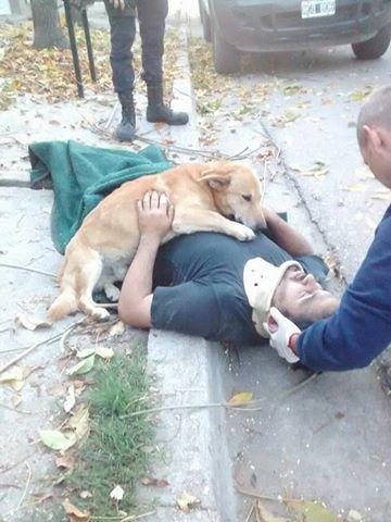 Cãozinho se recusa a sair de perto do dono desmaiado em acidente na Argentina 1