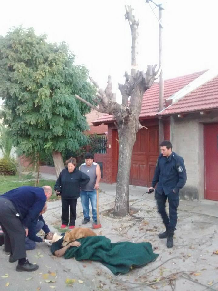 Cãozinho se recusa a sair de perto do dono desmaiado em acidente na Argentina 5