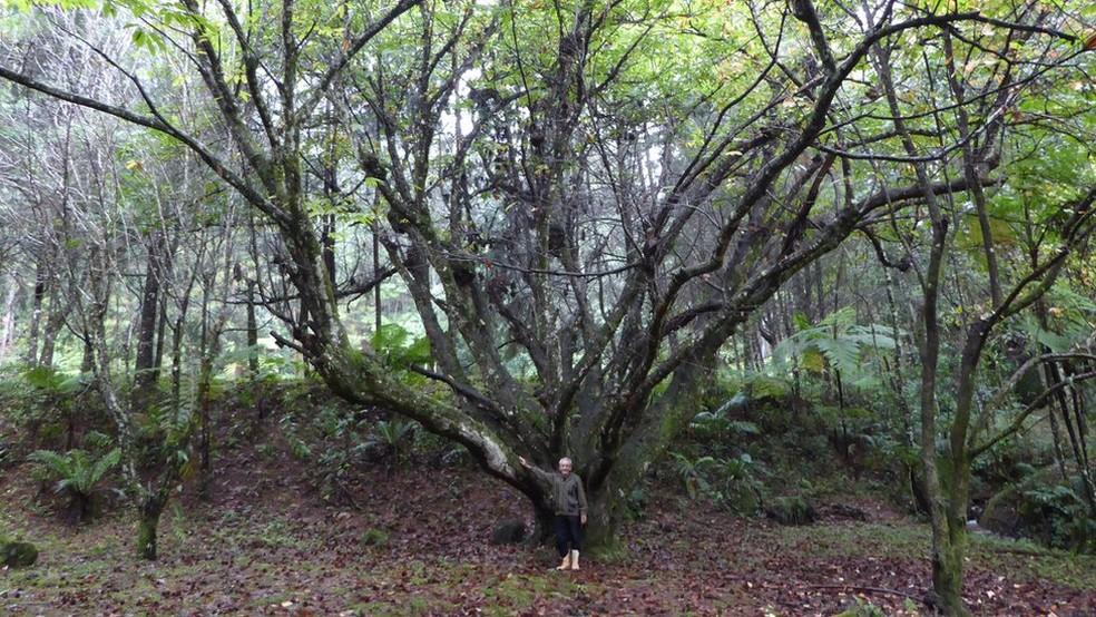 Chamado de 'louco' por vizinhos, homem transforma pastagem em floresta de 50 mil árvores 1