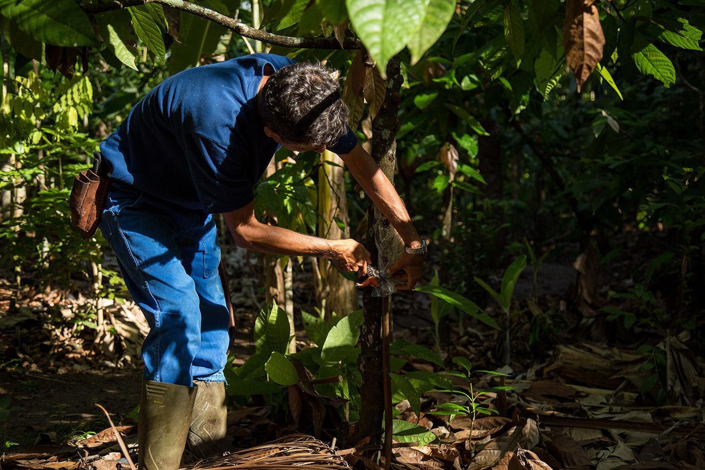 Documentário mostra família que conseguiu cultivar sua própria floresta 1