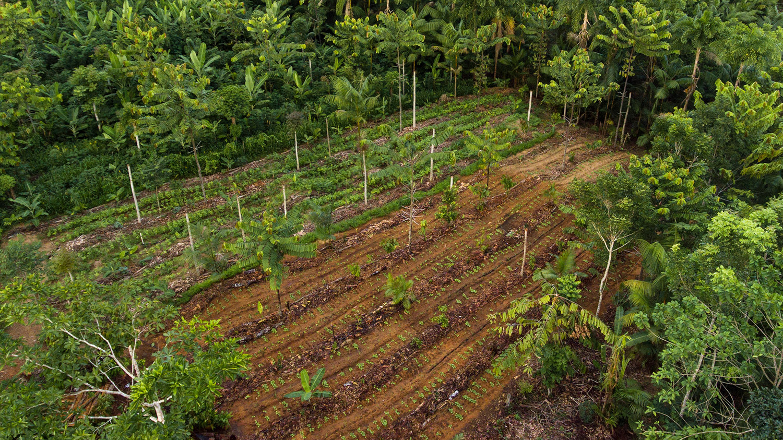 Documentário mostra família que conseguiu cultivar sua própria floresta 2