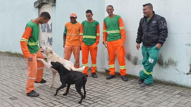 cães-coleta