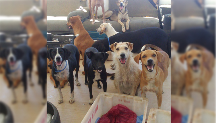 ajudar cães