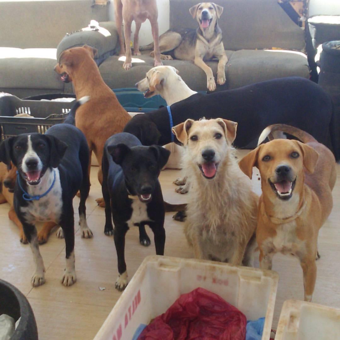 Whindersson Nunes se comove com apelo de abrigo e faz doação para ajudar cães que estavam sem ração 1