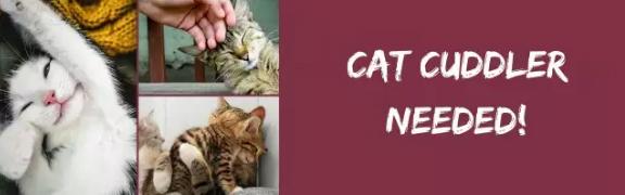 acariciador-gatos