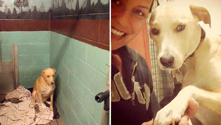 cachorra-eutanásia