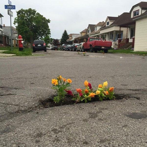 Pessoas tapam buracos de cidades com flores para chamar atenção de autoridades 3