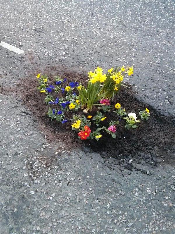 Pessoas tapam buracos de cidades com flores para chamar atenção de autoridades 6