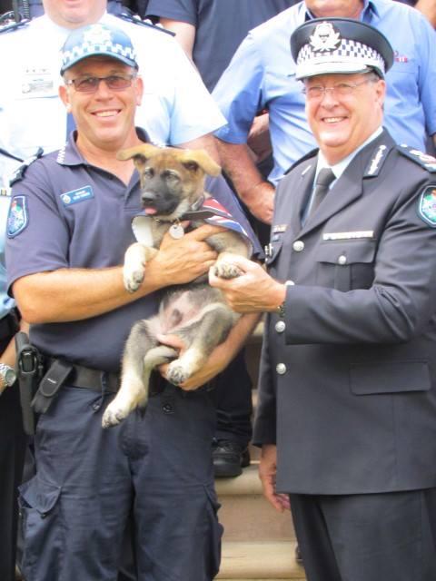Cãozinho é reprovado em treinamentos da polícia por ser 'dócil demais' 5