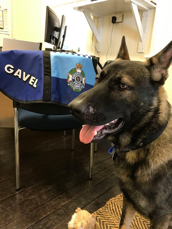 Cãozinho é reprovado em treinamentos da polícia por ser 'dócil demais' 7