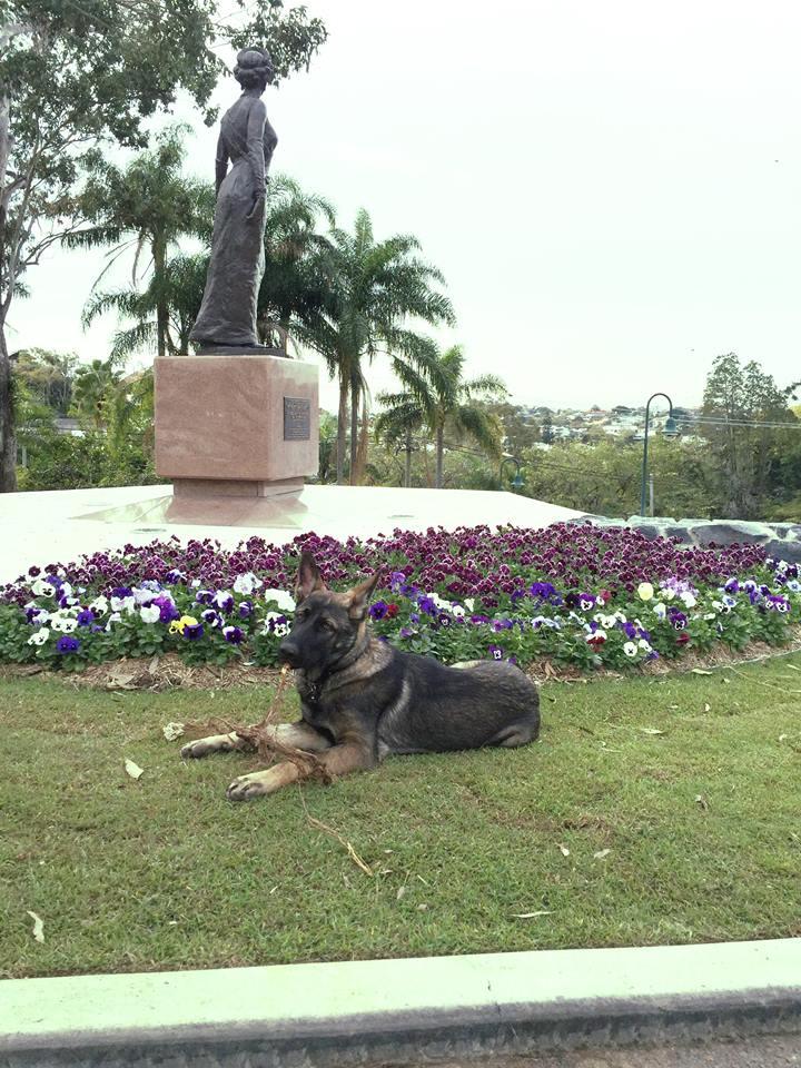 Cãozinho é reprovado em treinamentos da polícia por ser 'dócil demais' 9