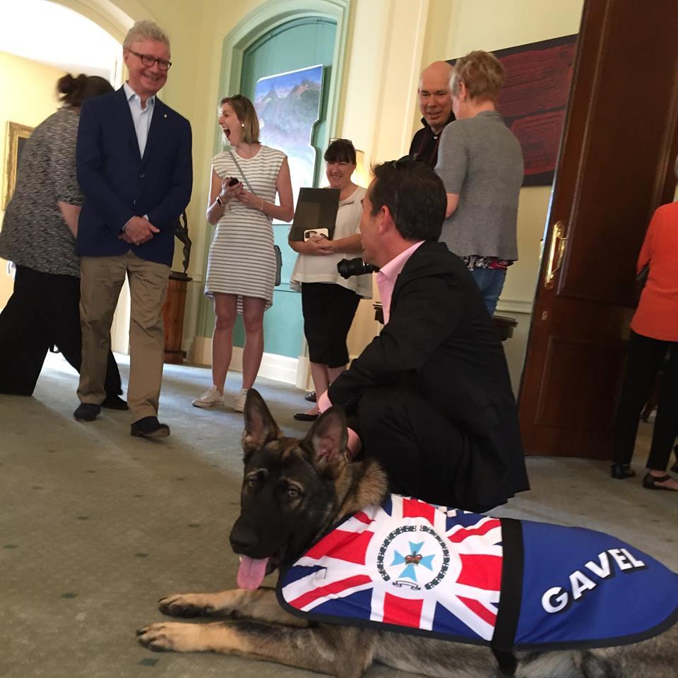 Cãozinho é reprovado em treinamentos da polícia por ser 'dócil demais' 11