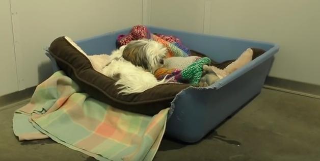 Animais de abrigo dormem pela primeira vez em uma cama e a gratidão deles é comovente 4