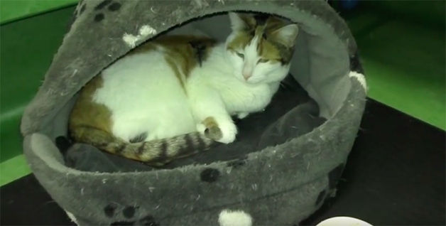 Animais de abrigo dormem pela primeira vez em uma cama e a gratidão deles é comovente 5