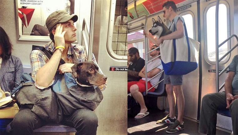 Nova-iorquinos 'burlam' proibição de cães no metrô com ideia genial 16