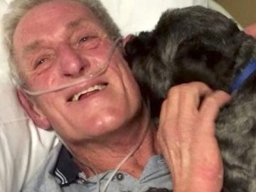 Cãozinho desperta tutor de coma induzido e vira herói 2