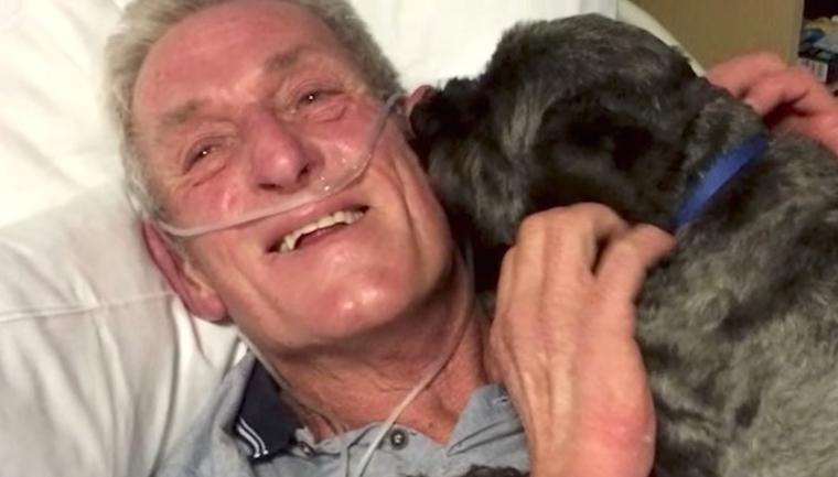 Cãozinho desperta tutor de coma induzido e vira herói 5