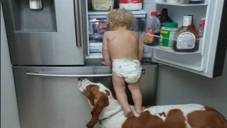 Vídeo de cachorro ajudando bebê a assaltar a geladeira vai animar o seu dia 1
