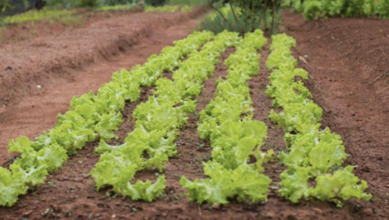 Horta comunitária que é fonte de alimento para os moradores, passa por transformação incrível 1