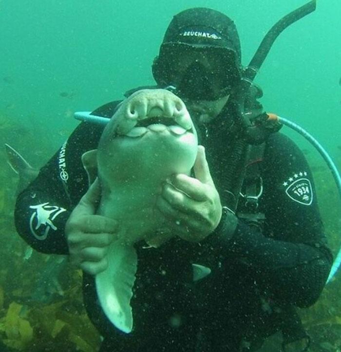 Há sete anos, tubarão implora por abraço de mergulhador todas as vezes que o vê 4
