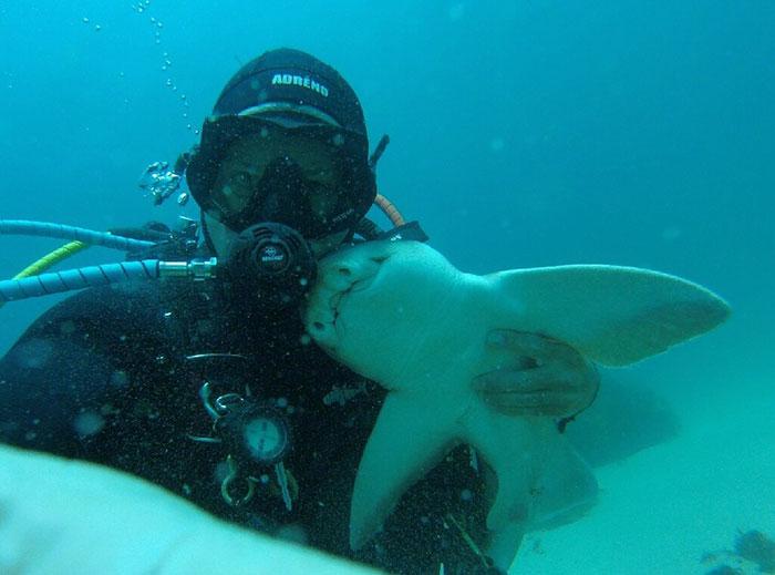 Há sete anos, tubarão implora por abraço de mergulhador todas as vezes que o vê 2