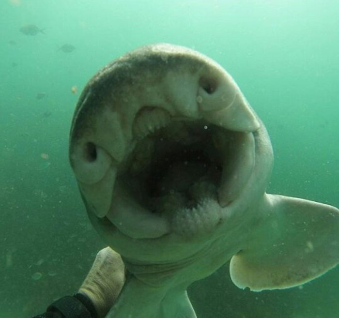 Há sete anos, tubarão implora por abraço de mergulhador todas as vezes que o vê 9