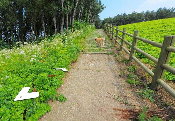 Cãozinho segue fotógrafo do Google Street View e aparece em todas as fotos do percurso 4