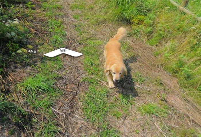 Cãozinho segue fotógrafo do Google Street View e aparece em todas as fotos do percurso 8