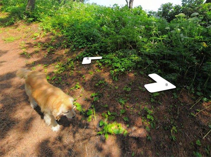 Cãozinho segue fotógrafo do Google Street View e aparece em todas as fotos do percurso 9