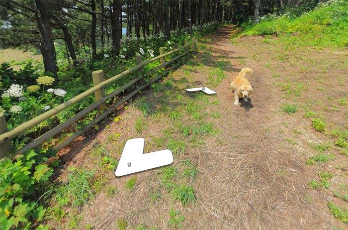 Cãozinho segue fotógrafo do Google Street View e aparece em todas as fotos do percurso 10