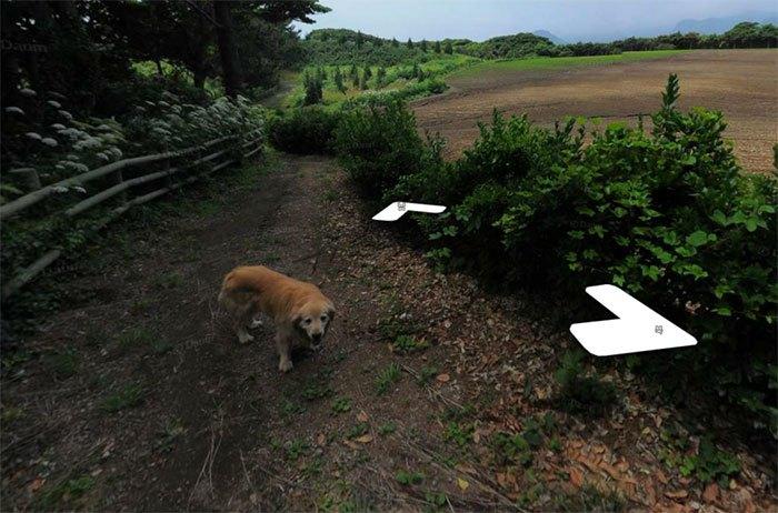 Cãozinho segue fotógrafo do Google Street View e aparece em todas as fotos do percurso 3