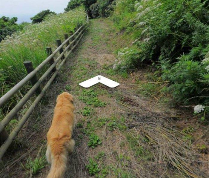 Cãozinho segue fotógrafo do Google Street View e aparece em todas as fotos do percurso 5