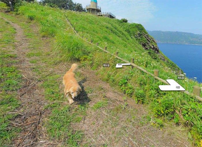 Cãozinho segue fotógrafo do Google Street View e aparece em todas as fotos do percurso 6