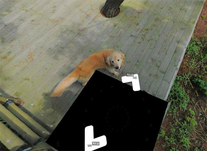 Cãozinho segue fotógrafo do Google Street View e aparece em todas as fotos do percurso 7