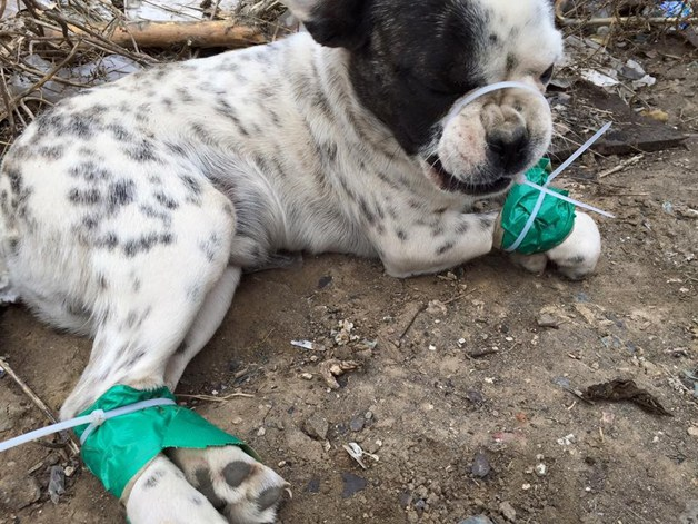 Homem arrisca a própria vida para salvar mais de mil cães em Festival de Carne de Cachorro na China 5
