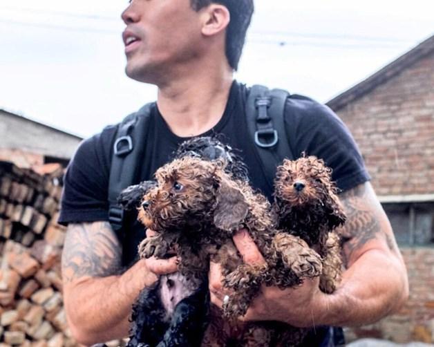Homem arrisca a própria vida para salvar mais de mil cães em Festival de Carne de Cachorro na China 2