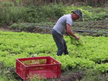 Pedreira cede terreno para plantio de horta comunitária em Juiz de Fora 14