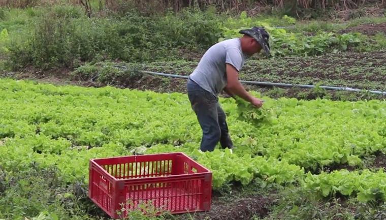 Pedreira cede terreno para plantio de horta comunitária em Juiz de Fora 6