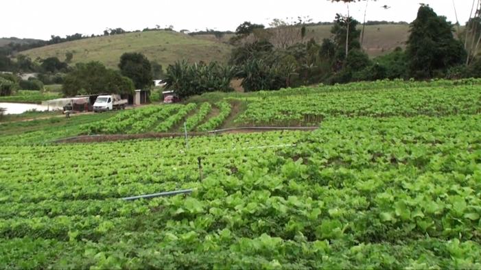 Pedreira cede terreno para plantio de horta comunitária em Juiz de Fora 5