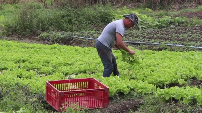 Pedreira cede terreno para plantio de horta comunitária em Juiz de Fora 2