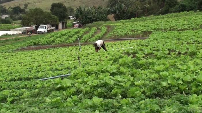 Pedreira cede terreno para plantio de horta comunitária em Juiz de Fora 3