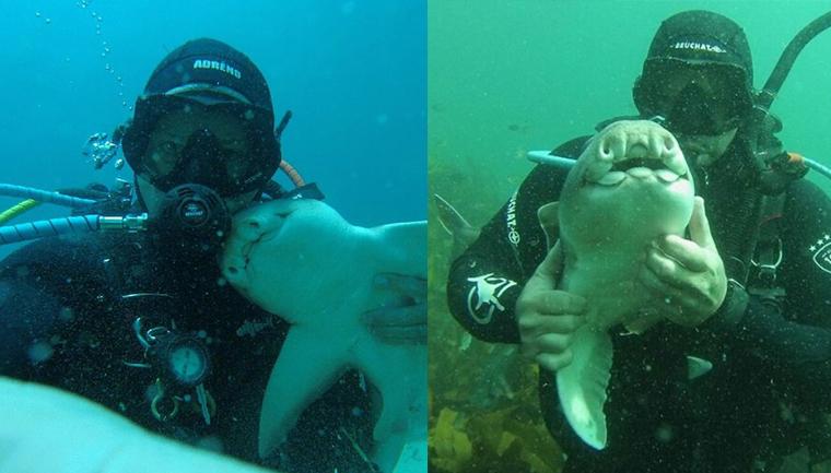 Há sete anos, tubarão implora por abraço de mergulhador todas as vezes que o vê 1