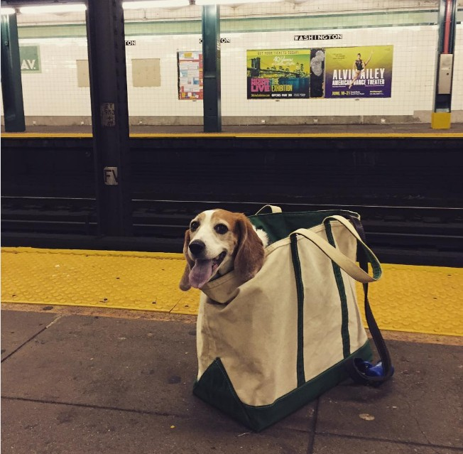 Nova-iorquinos 'burlam' proibição de cães no metrô com ideia genial 12