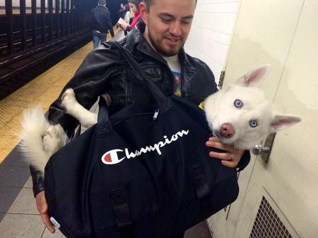 Nova-iorquinos 'burlam' proibição de cães no metrô com ideia genial 5