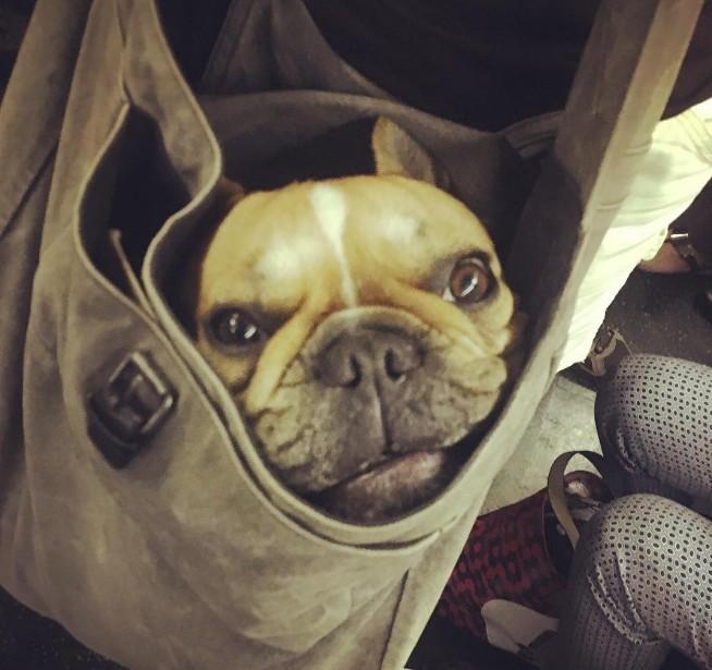 Nova-iorquinos 'burlam' proibição de cães no metrô com ideia genial 6