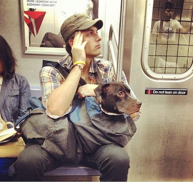 Nova-iorquinos 'burlam' proibição de cães no metrô com ideia genial 8